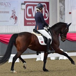 Dressage Dreams