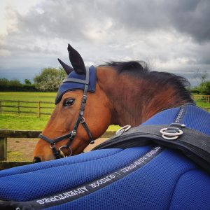 3D Air Mesh saddlepad and fly veil