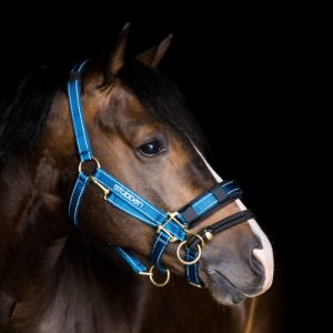 Stubben stable halter with detachable controller