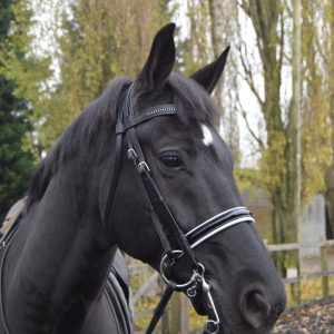 top of the range double bridle