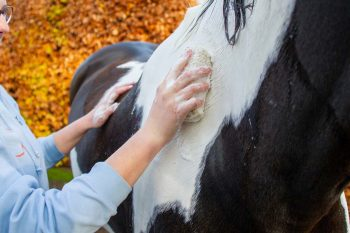see-change-now-horse-shampoo-product
