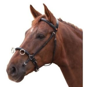 Cheval leather training cavesson